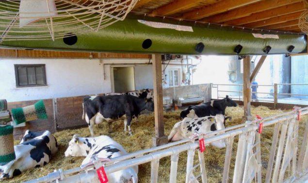 Lueftung-Milchviehstall-Energieeffiziente-Landwirtschaft
