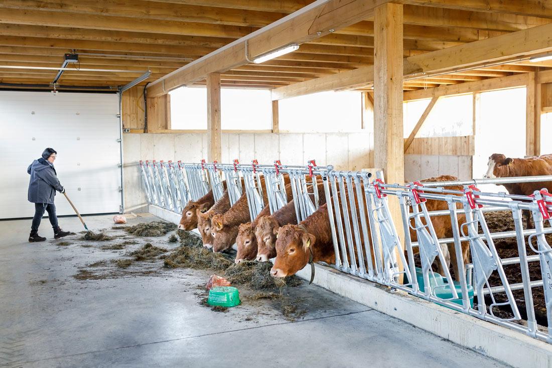 Von glücklichen Kühen und einer überzeugten Bäuerin